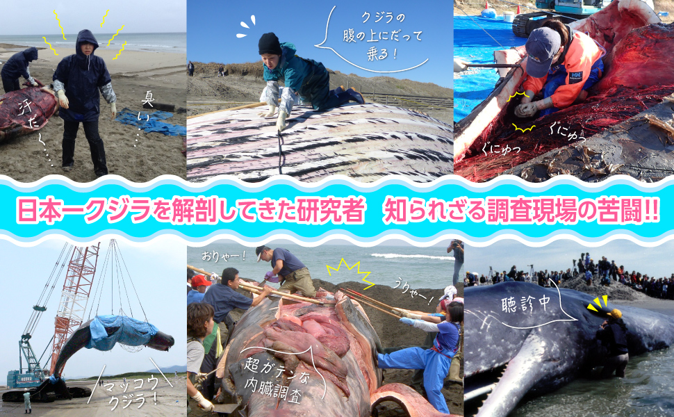 海獣学者、クジラを解剖する。