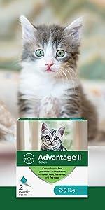 advantage kitten