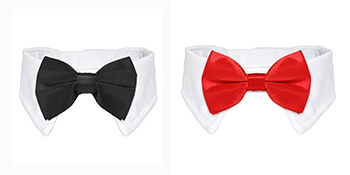 Koolmox bow ties for graduation
