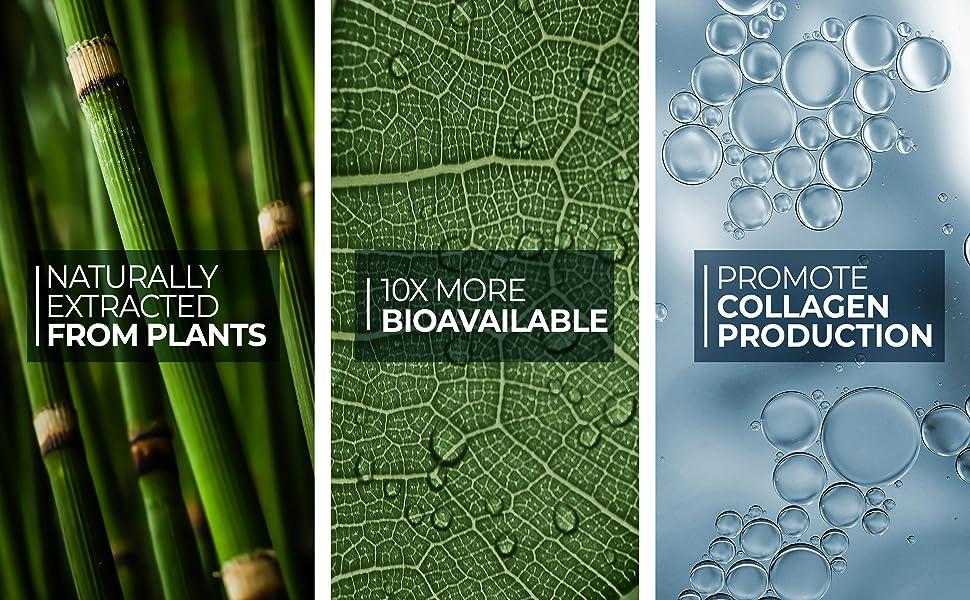 Living Silica Plant Based