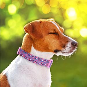 reflective dog collar for large dogs