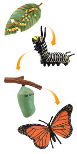 butterfly cycle toys