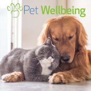 pet wellbeing dog cat canine feline health supplements natural herbal holistic integrative