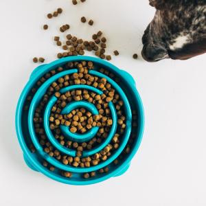 Outward Hound Fun Feeder Slo-Bowl Slow Feeding Dog Bowl Reduces Bloat
