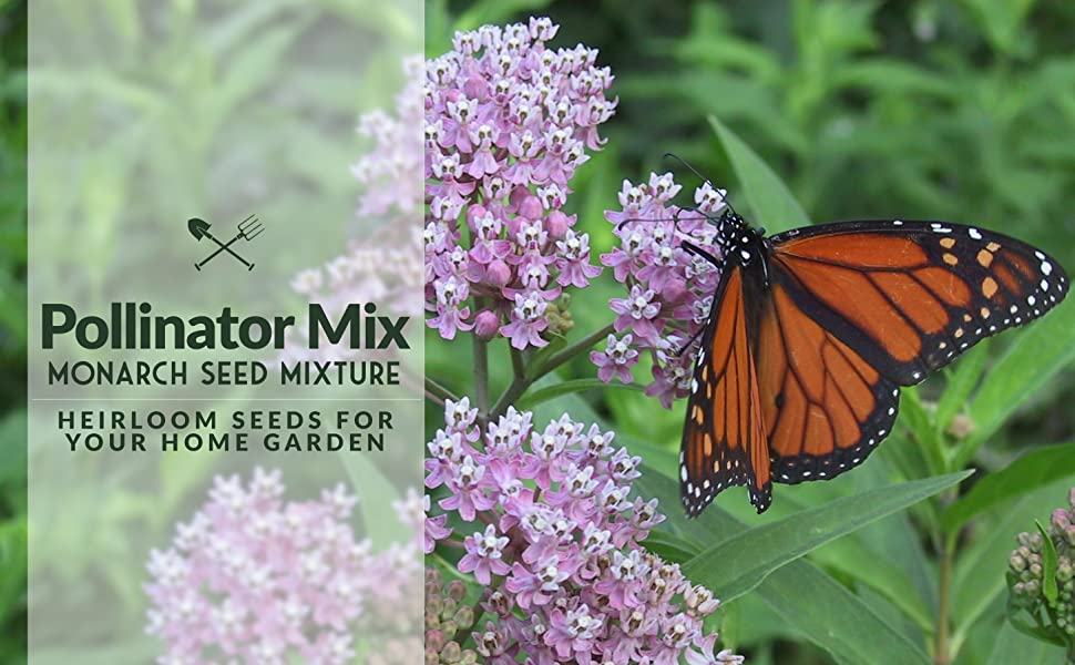 pollinator mix monarch seed mixture