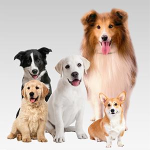 Bark Collar Control for Small Medium Large Dogs