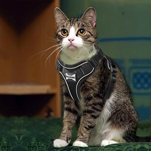 medium kitty harness