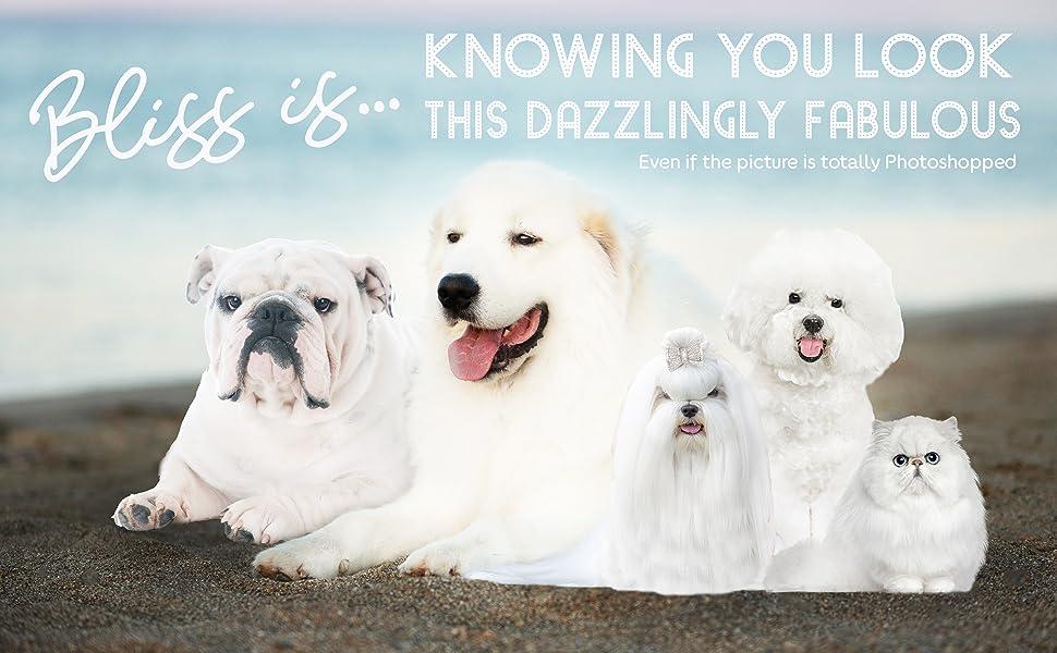 the blissful dog shampoo, whitening dog shampoo, luster shampoo, bulldog shampoo, samoyed shampoo