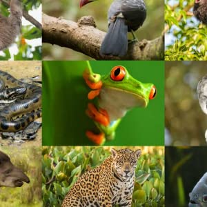 save,Rainforest,Environment,hair,planet,handmade,plastic,bars,natural,organic,nature,shampoo