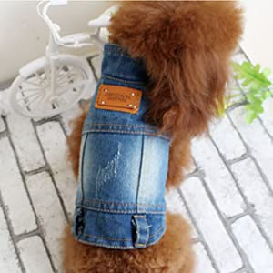 BLUE Stand Collar Jacket