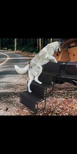 non slip dog ladder