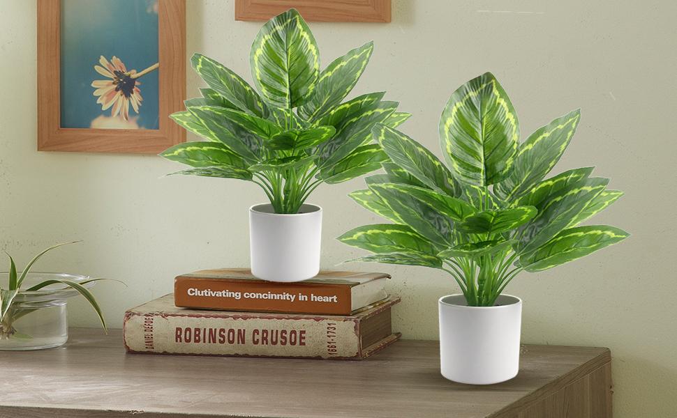 2 Pack Dieffenbachia Live Plant