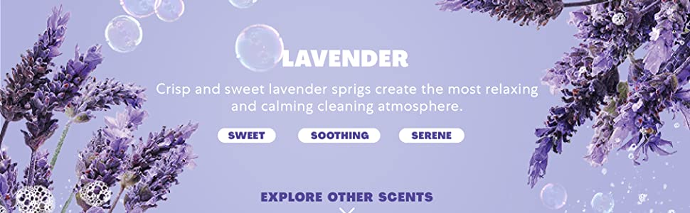 Lavender Scent Description