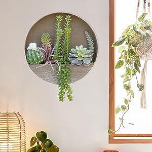 hanging succulents plants in pots