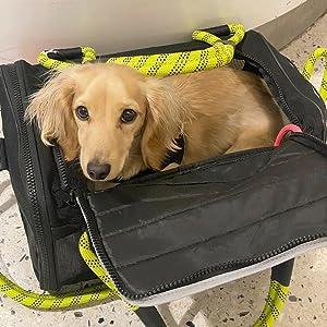 Miniature Dachshund in Small Roverlund Pet Carrier