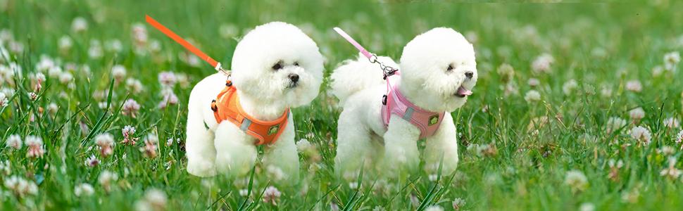 small dog harness and leash set