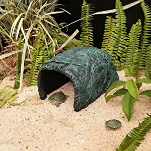Reptile Cave
