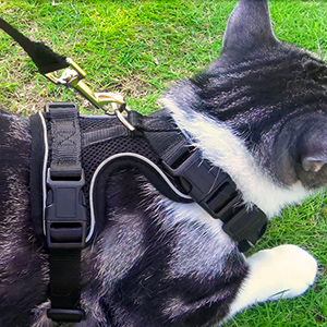 harness for cat