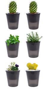 "6pcs 4.33"" self watering black transparent herb pots succulent planters"