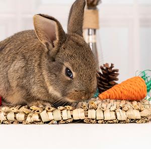 rattan paper carrot
