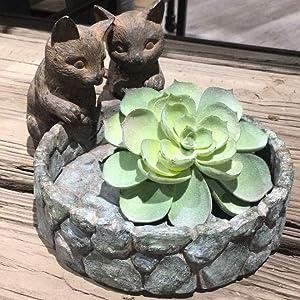 cats planter