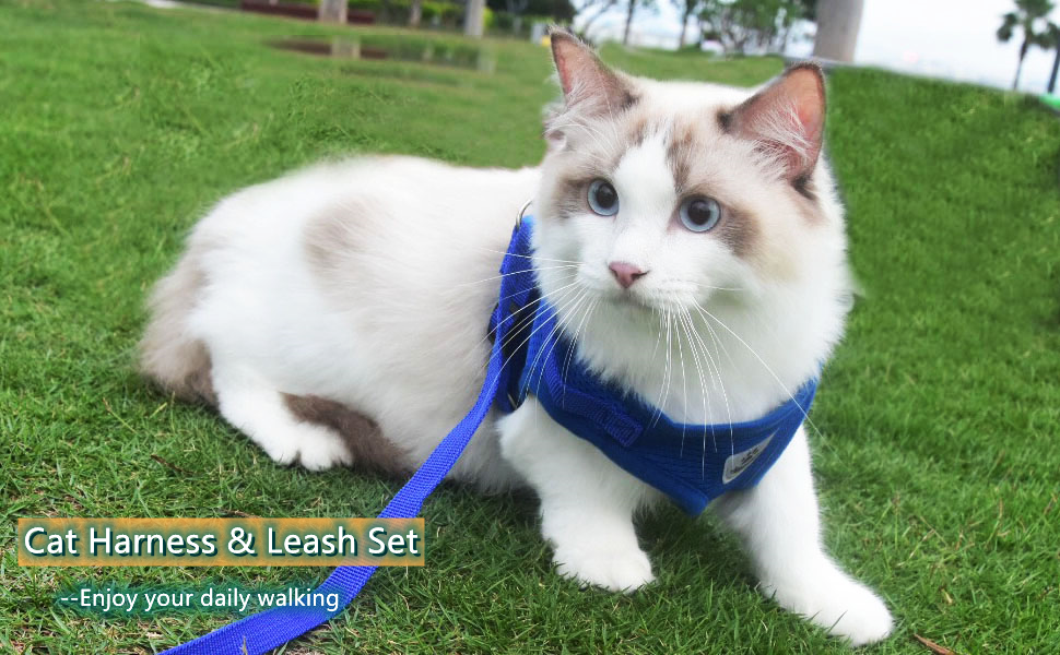 kitty harness and leash cat leash and harness set kitty holster cat harness cat leash harness set