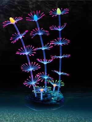 Glowing feather coral
