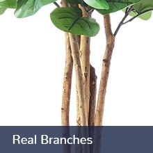 Real Branches