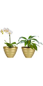bowl plant pot
