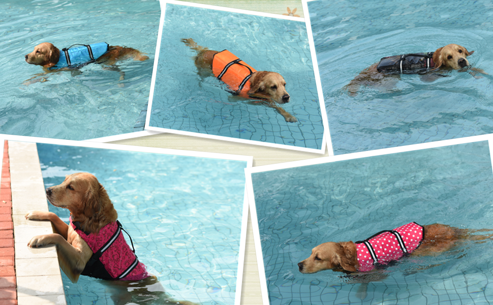 dog is swimming