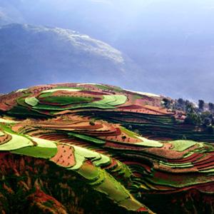 夏威夷果种植地