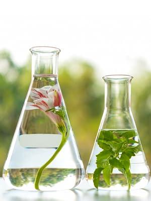 fermented skin care