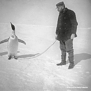 De Gerlacheand an emperor penguin captured on the pack ice. De Gerlache Family Collection