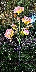 插杆玫瑰3