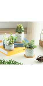 Gray succulent pots with saucer