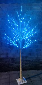 6FT Birch tree