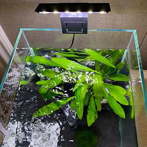 XEOGUIYA 6W 12 LED Aquarium Planted Clip Lamp