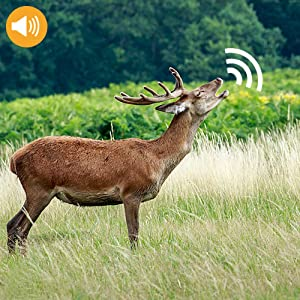 trail camera with audio