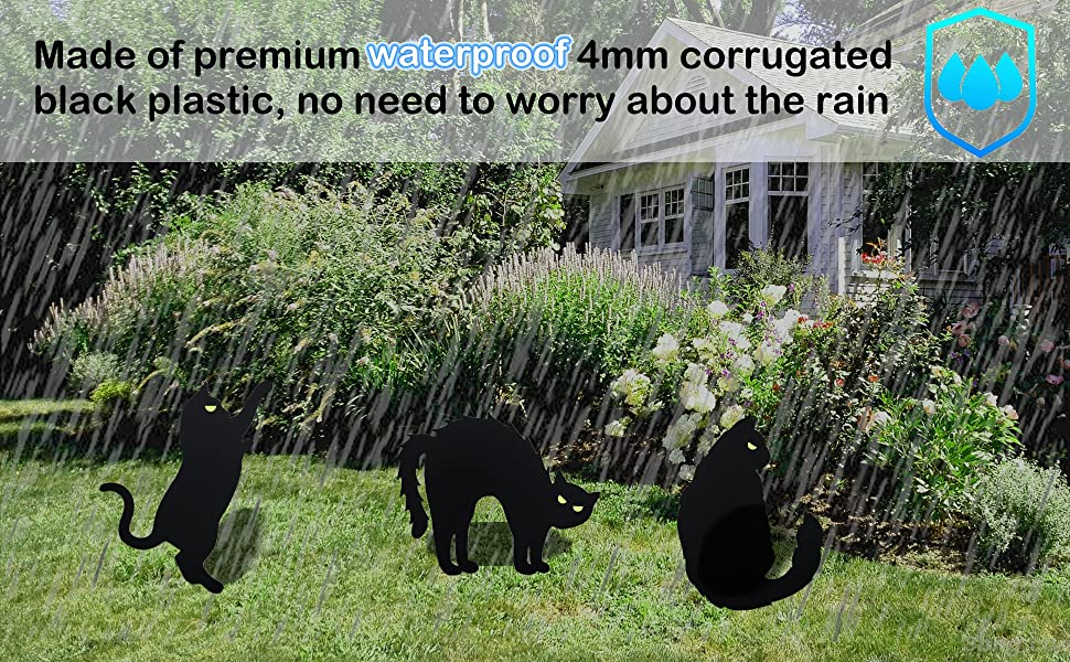 Do not worry about the rain
