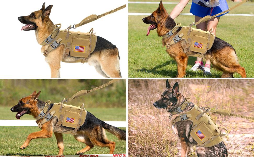 german shpherd wear Forestpaw dog harness leash and collar set