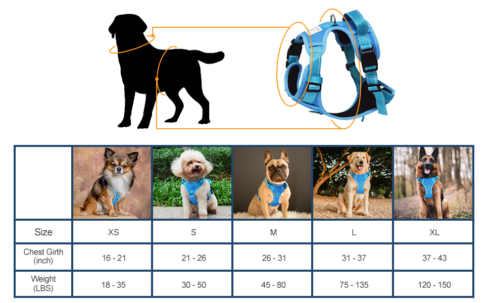 How to confirm the suitable dog harness size for your furry buddy