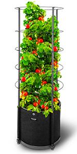 Tomato Vertical Garden
