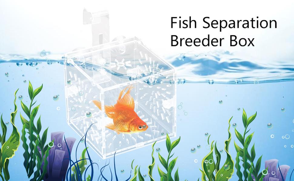 Fish Separation Breeder Box
