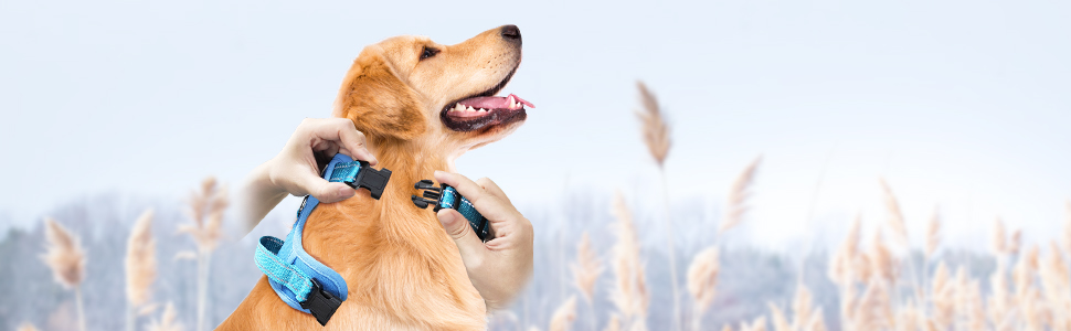 dog harness easy to buckle on and off