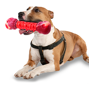 Big breed dog bites toy