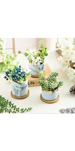 Blue succulent pots with saucer