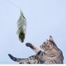 Funny Cat Toy