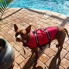 dog life jacket medium