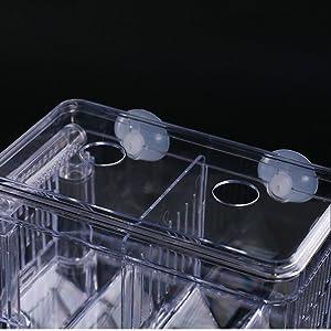fish tank incubator