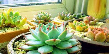 Mini Succulent Tools